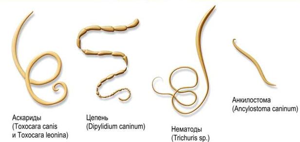 все болезни от паразитов проверенное лечение тройчаткой